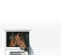 Motorised Horsebox